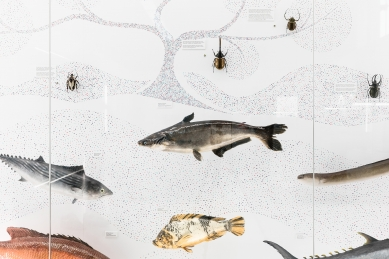 Doba Genová - výstava vNárodním muzeu - foto: Tomáš Hejzlar