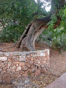 Le Cabanon  - Strom před Le Corbusierovým domem byl v následujícím roce pokácen. - foto: Petr Šmídek, 2006