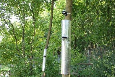 V Otevřené zahradě měří chladicí účinek stromů na městské klima