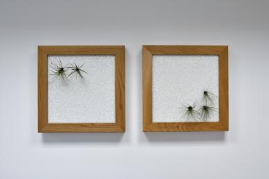 Prosklené stěny WOODYGLASS