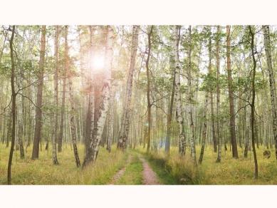 Ida Čapounová - Venkov a krajina - Doplnění divočiny - nový háj